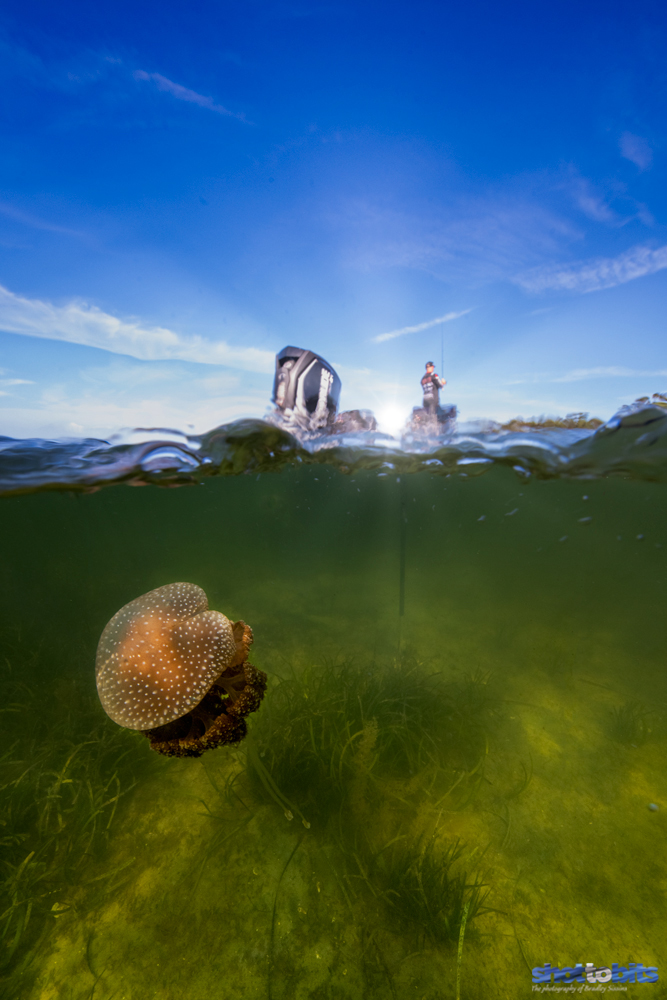 Dawn Invasion of the Jellyfish, St Georges Basin, NSW, Australia